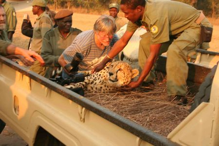 Mozambique – Gorongosa NP återfår glans