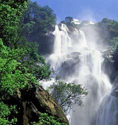 Regnskog och berg i Udzungwa NP