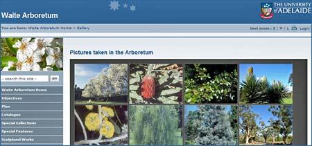 Australien – gratis guide till 800 träd