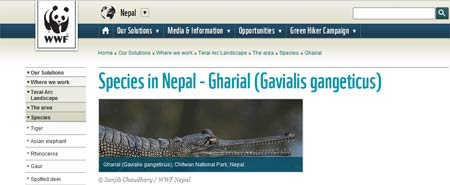 Hitta gharial krokodiler i Nepal