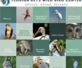 us-florida-keys-bird-fram