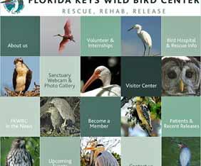 us-florida-keys-bird-fram