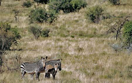 Vandringsled i Zebrapark åter öppen
