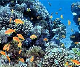 red-sea-korall-fram