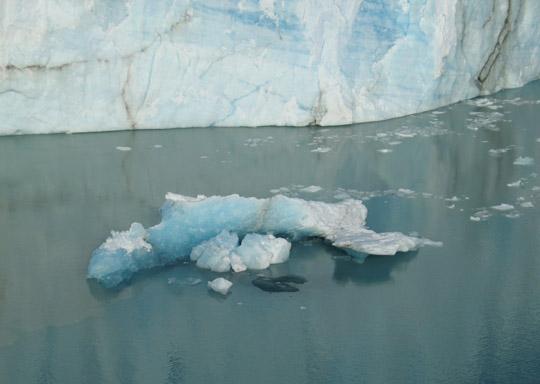 Jättelika glaciärbitar lossnar i Patagonien