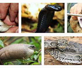 kenya-snake-safari-fram