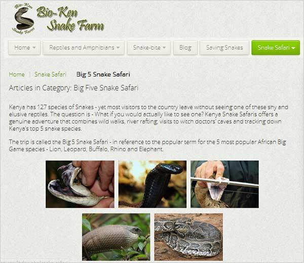 kenya-snake-safari