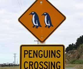 nz-pingvin-fram