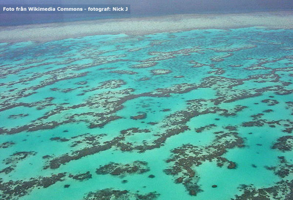 au-great-barrier-reef-nickj