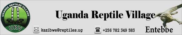 uganda-reptile-villag