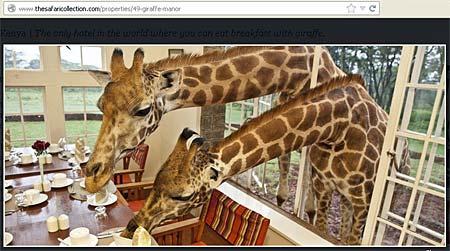Spektakulärt boende – Giraffe Manor Kenya