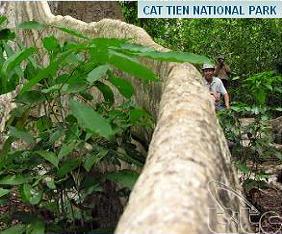 vietnam-cat-tien-np-fram