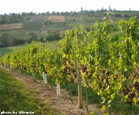 croatia-wine-day-istria-fra