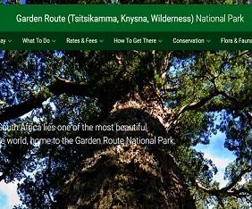 garden-route-sa-giant-tree-mini