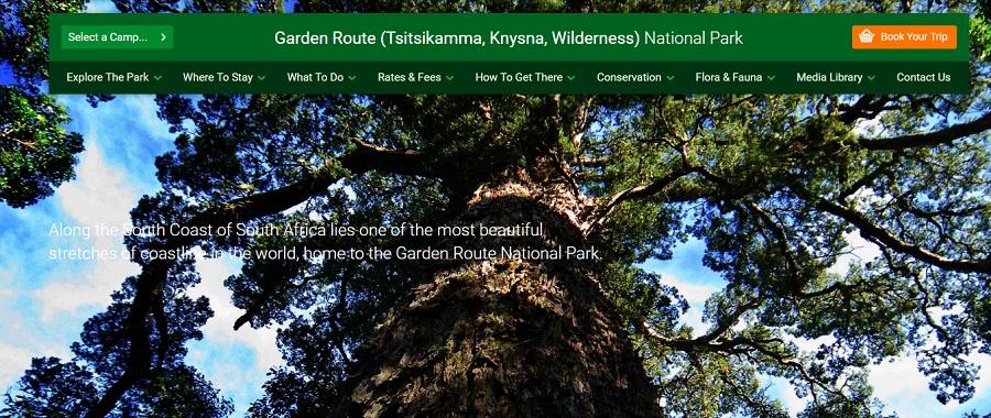 garden-route-sa-giant-tree