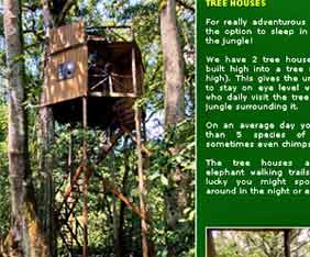 chimps-nest-uganda-fram