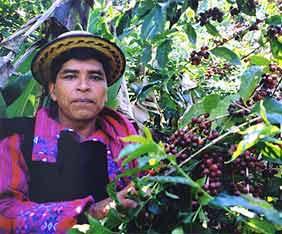 guatemala-kaffe-tur-fram