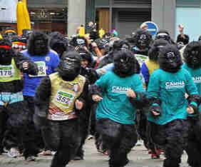great-gorilla-run-fram