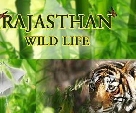 ind-rajasthan-wildlife-fram